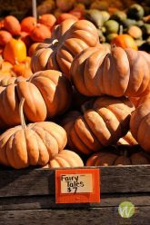 Cinderella pumpkins are named for their fairy tale shape and come in a variety of colors.